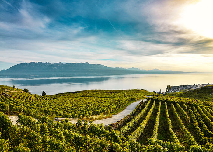 Region Genfersee - With the Lavaux Express through the vineyards  Between April and October, you can discover the viney