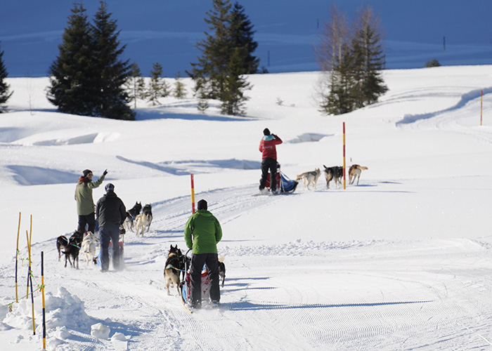 Hotels in Eastern Switzerland / Liechtenstein - Drive a dog sled yourself  In Flumserberg you will become a sledge dog driver yourself. An experienc